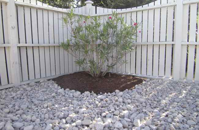 Backyard Ground Cover Ideas no more mowing 10 grass free alternatives to a traditional lawn Garden Design With Swimming Pool Landscaping Four Seasons Landscaping Obx With Landscape Design Ideas From Seasonslandscaping